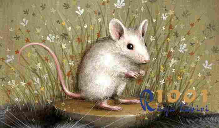 Rüyada beyaz fare görmek - Rüya Tabirleri Ansiklopedisi