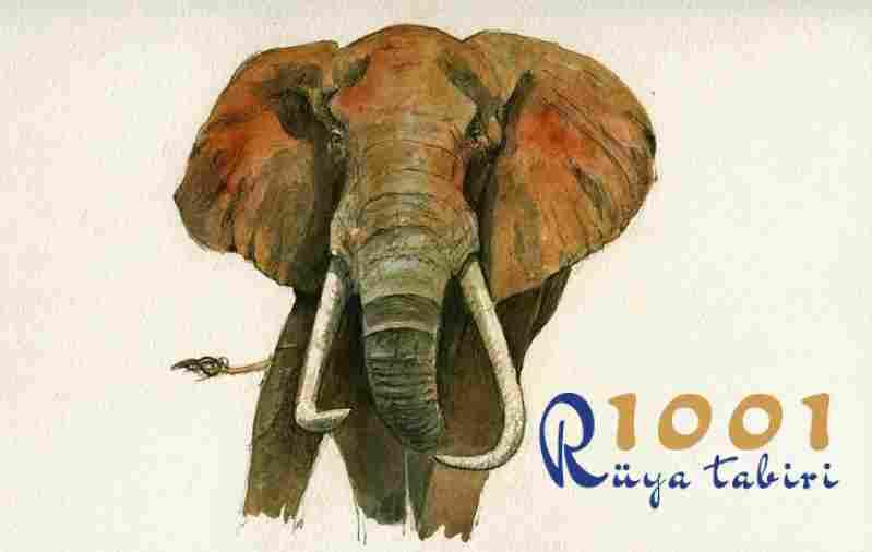 Rüyada fil görmek ne demek - İslami rüya tabirleri