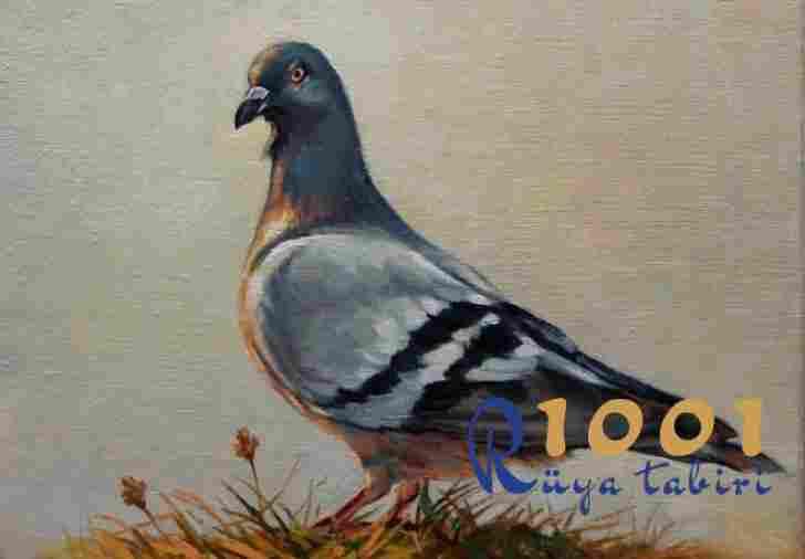 Rüyada güvercin görmek neye işarettir? www.1001ruyatabiri.com