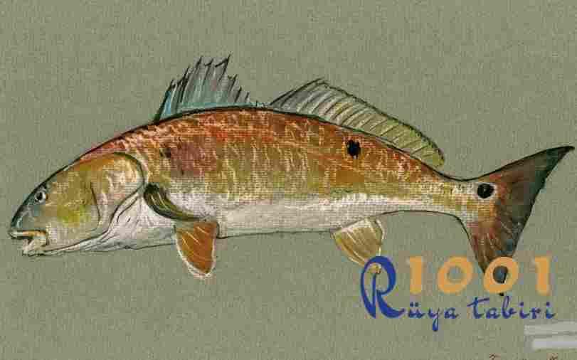 Rüyada Balık Görmek Neye İşarettir? Diyanet, İslami, Dini