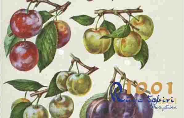 ruyada erik gormek-ruyada erik yemek-ruyada yesil erik gormek www.1001ruyatabiri.com
