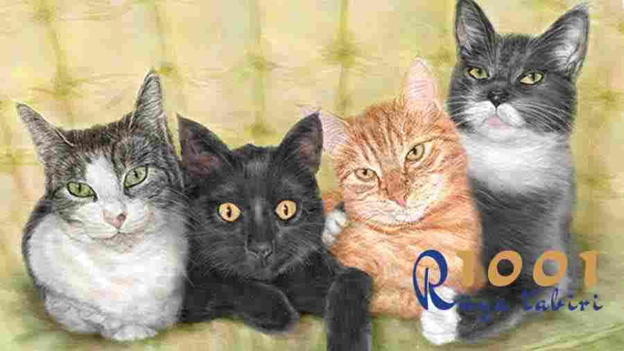 Ruyada Kedi Gormek Ne Demektir-Diyanet Ruya Tabirleri Sozlugu-Yavru Kedi Gormek-kedi sevmek-yorumu