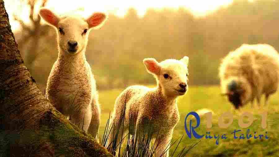 Ruyada Kuzu Gormek Koyun Gormek Ne Demek-Beyaz Kuzu Eti Gormek-kuzu eti yemek-diyanet-dini-isami-1001ruyatabiri
