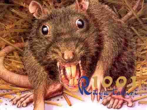 ruyada-fare isirmasi-isirdigini gormek-fare oldurmek-beyaz fare siyah fare gormek-buyuk-yavru-fare-1001ruyatabiri