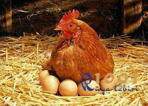 ruyada-tavuk yumurta-gormek-haslanmis-yumurta-gormek-kirik-yumurta-yemek-toplamak-almak-cok sayida yumurta sarisi-cig yumurta