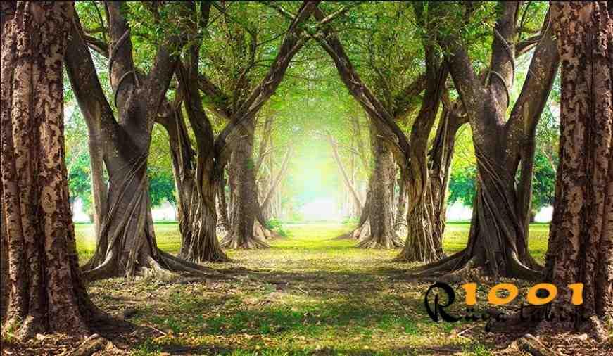Rüyada Orman Görmek, Orman Yangını Gormek (yeşil)
