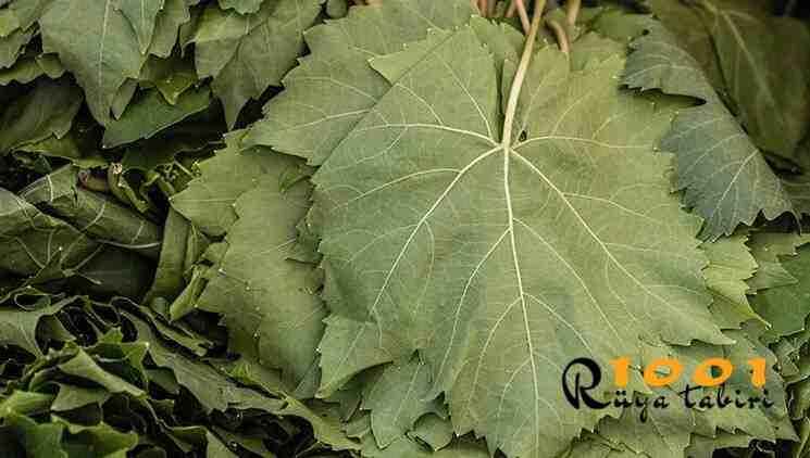 ruyada yaprak gormek-yesil yaprak sarmasi gormek-ne demek-diyanet-yaprak toplamak