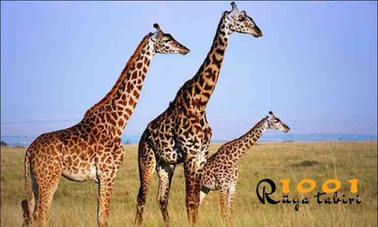 Rüyada Zürafa Görmek