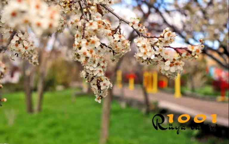 ruyada bahar gormek-ilkbahar gormek-ne demek-diyanet-1001ruyatabiri-bahar mevsimi
